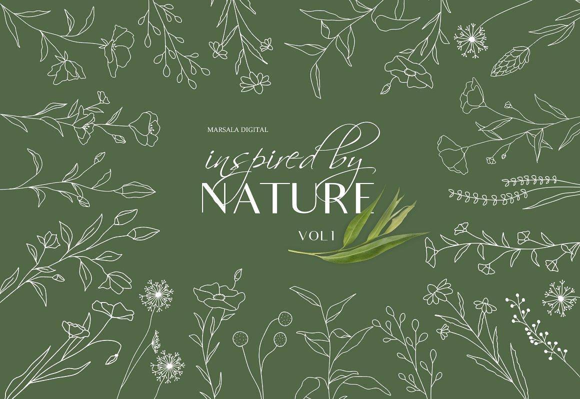 植物线稿艺术插图