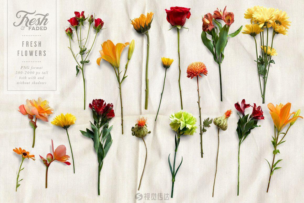 顶部视角鲜花和干花PNG素材