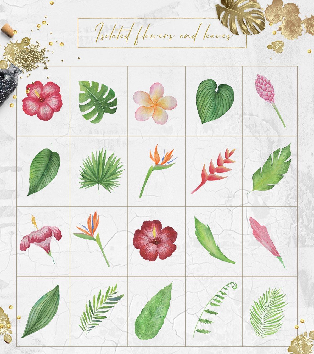 热带植物水果水彩画