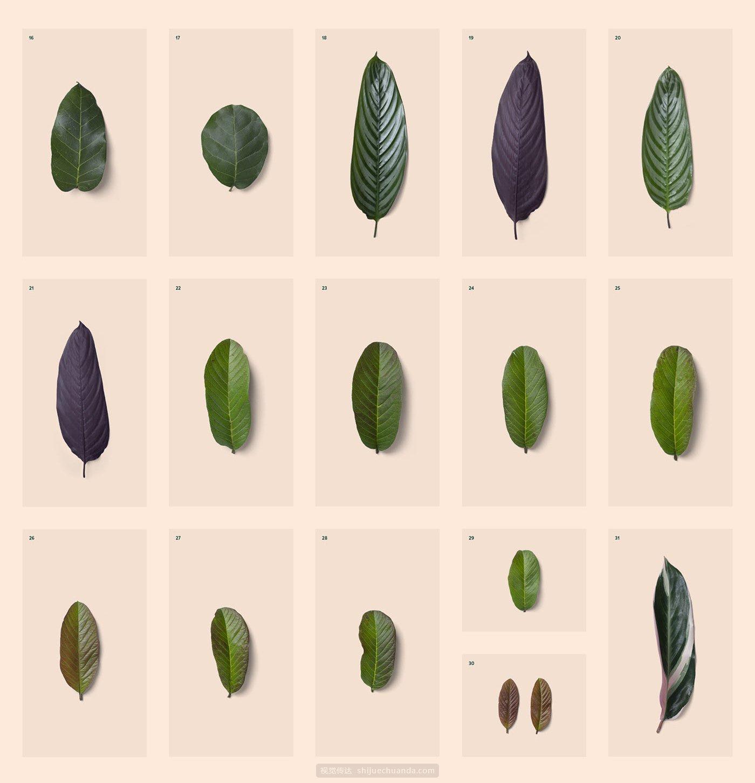 树叶树枝装饰PNG元素